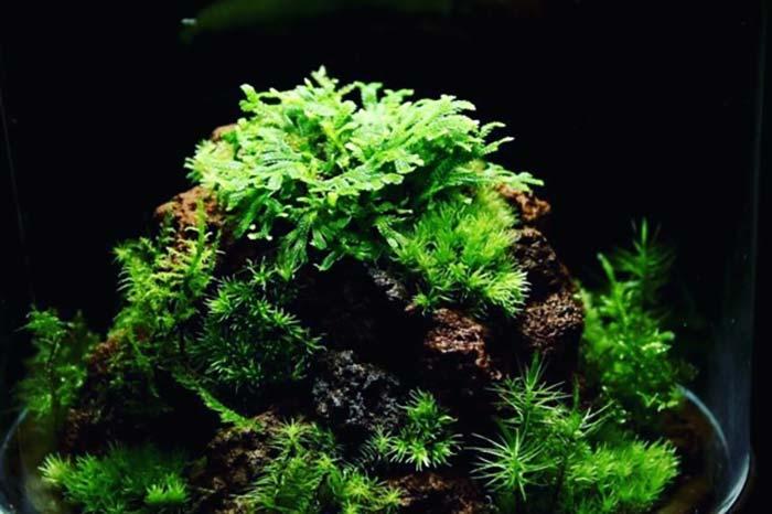ネットで発見した綺麗な苔テラリウム