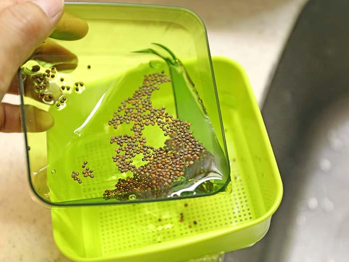 種を水に一日浸す