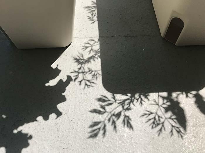 ミニニンジンの影