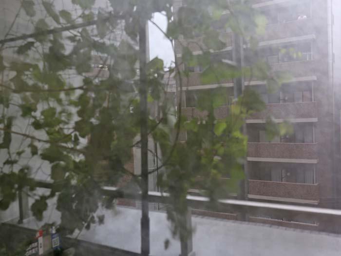 瀬戸ジャイアンツを台風が直撃!ブドウ棚の強風対策の方法と効果