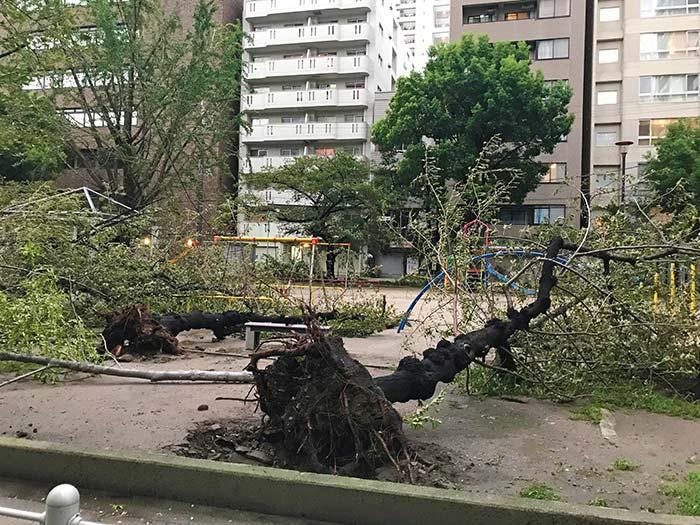 台風で倒壊した公園の木