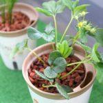 土をなくして虫を撃退!家庭菜園のプランターを水耕栽培にする方法