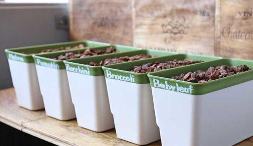 ほぼ水耕栽培で種まき!カボチャ・ズッキーニ・ブロッコリー・メロンも育てるよ!