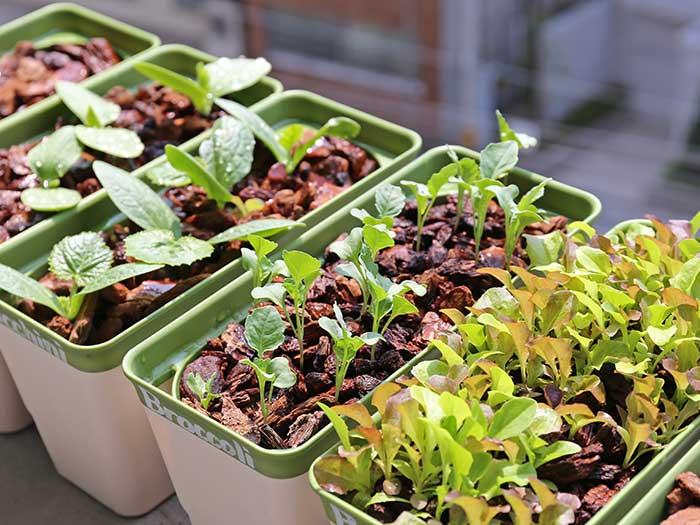 順調に成長するほかの野菜