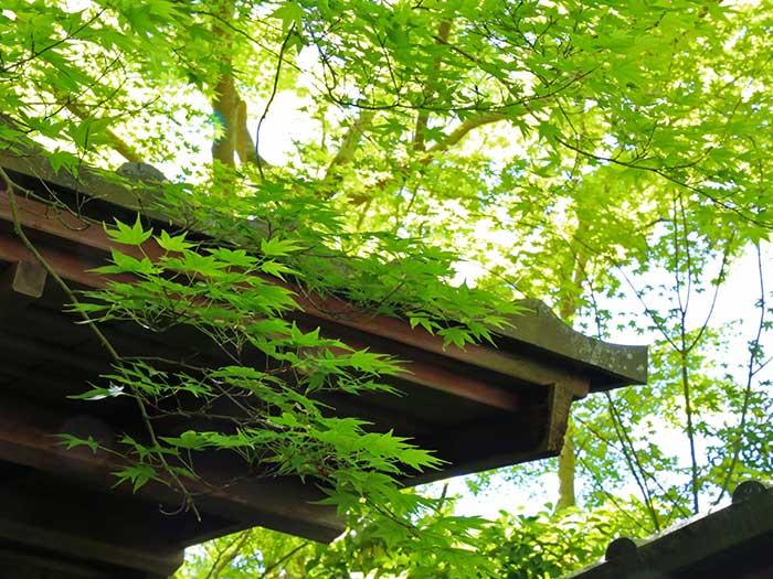 美しくて癒される京都の新緑