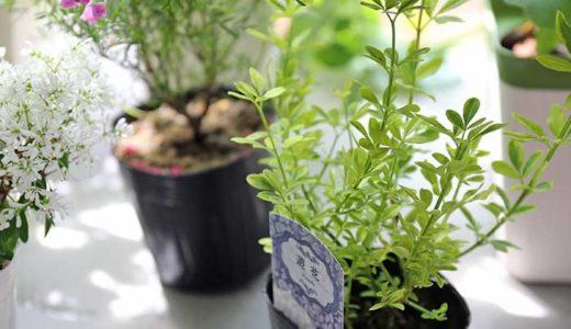 底の穴あけ不要!普通の食器をおしゃれな植木鉢にしちゃう方法!
