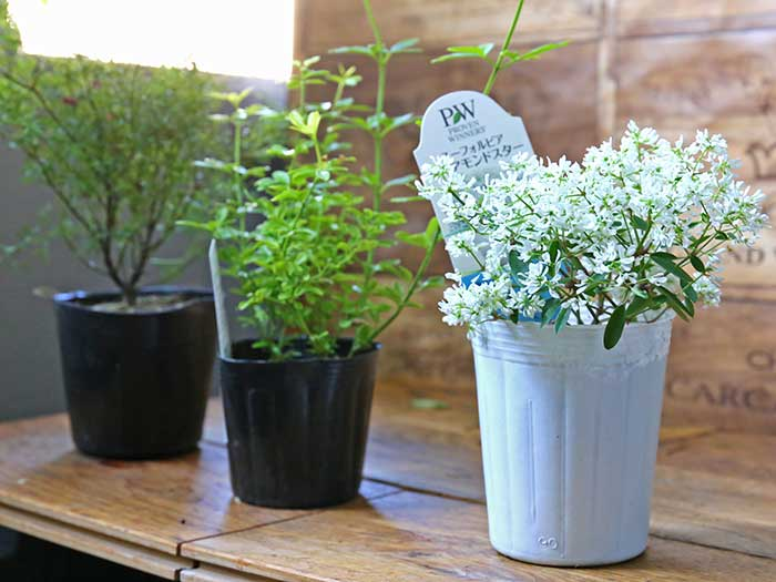 3号ポットで販売されてる花や植物
