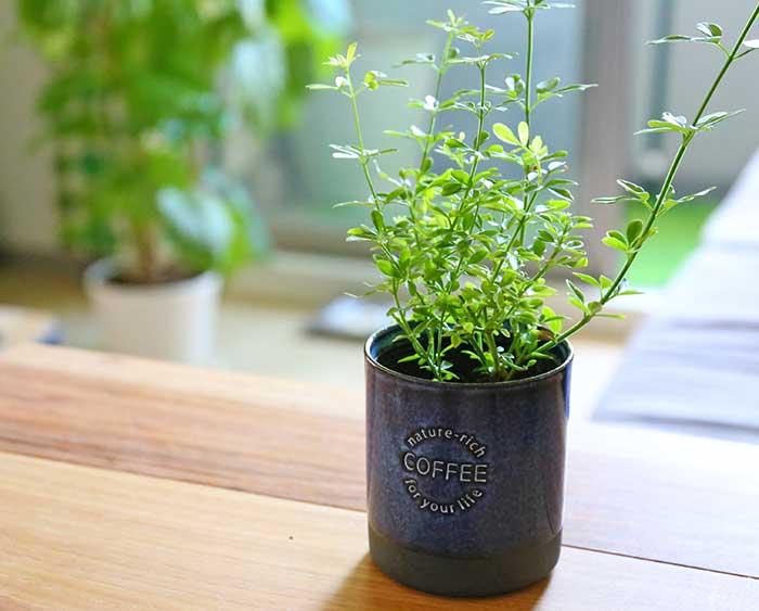 おしゃれな植木鉢カバー
