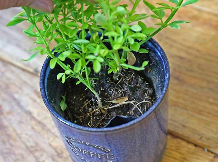 根元の土を綺麗に見せる方法