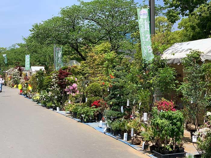 大阪城公園の植木市