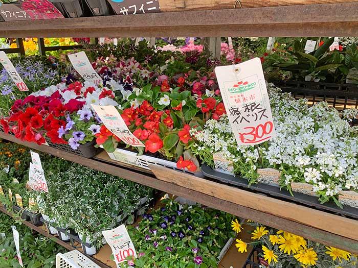 植木市のお花