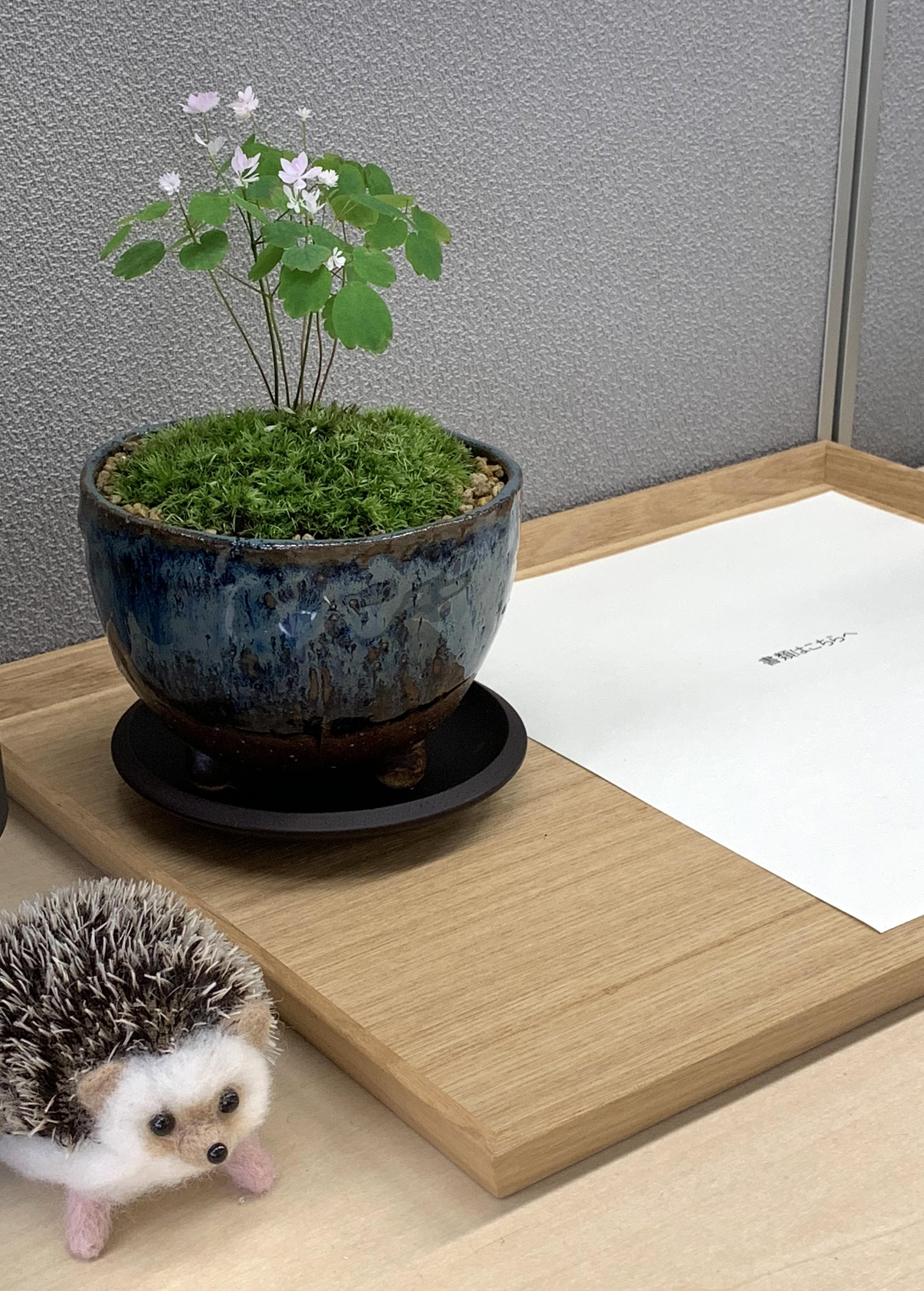 会社のデスクに苔盆栽