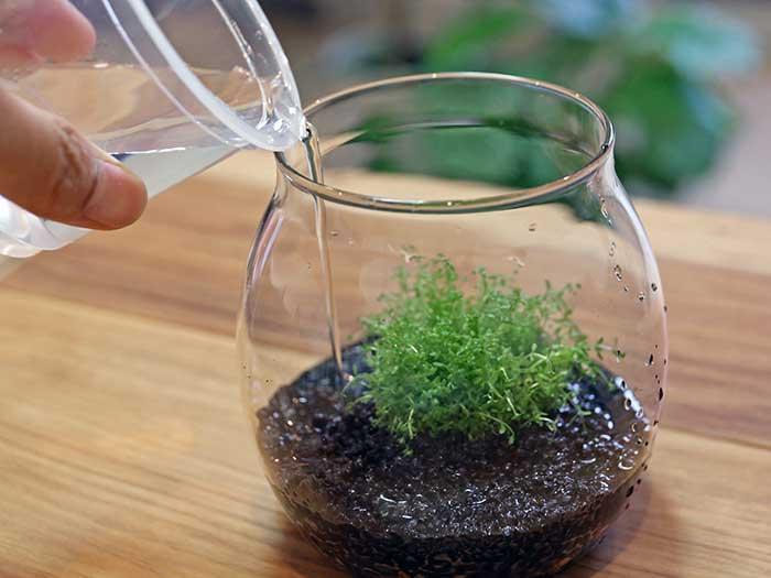ボトルに静かに水を灌ぐ