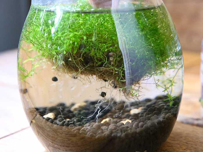 浮き上がってしまった水草
