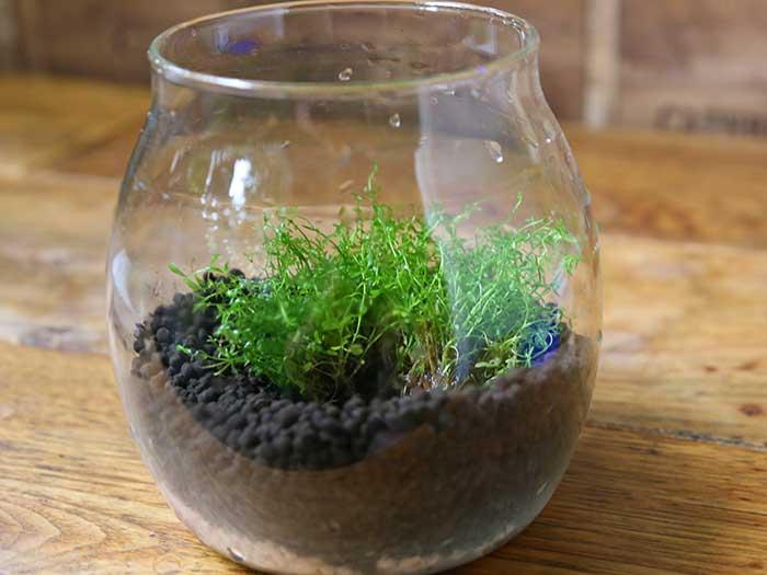水草を植える