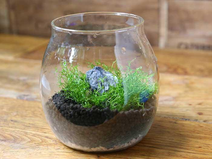 水草を追加で植え付け