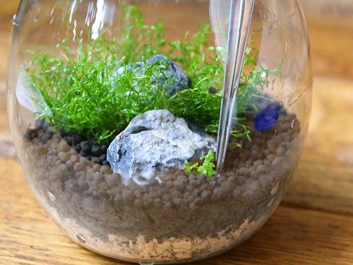小さい水草も植える