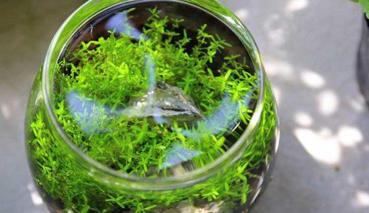小さいのに綺麗な水景!水草のボトルアクアリウムを立ち上げてみた!