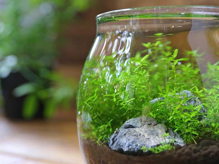 誰でも簡単にできる水草アクアリウム
