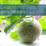 土を使わない野菜栽培写真コンテスト