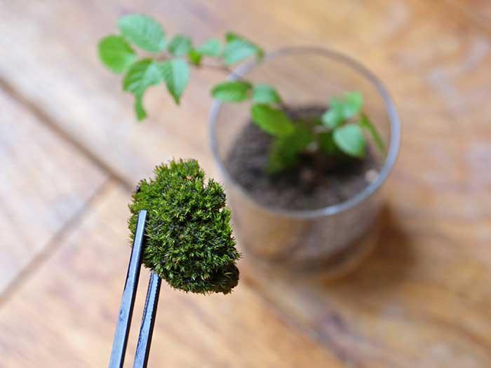 苔をそっと配置