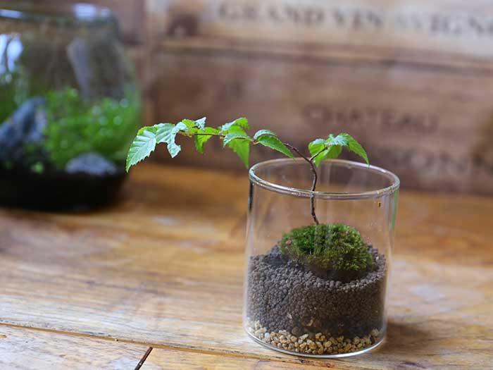 小さい木を囲むように苔を置く