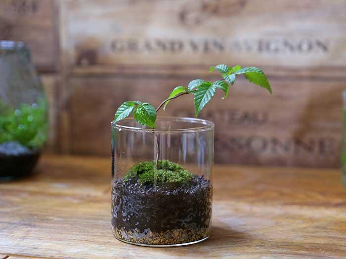 小さいガラスボトルの苔盆栽