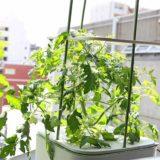 トマトの支柱が簡単に立てられる!水耕栽培キットMASUCOの便利な機能