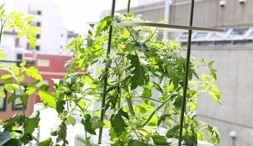 トマトの支柱が簡単に立てられる!水耕栽培キットienaの便利な機能
