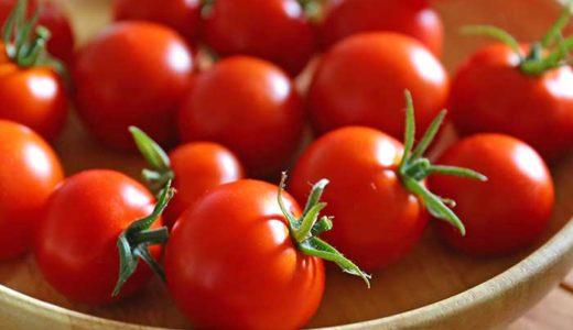 水耕栽培キットでトマトが大豊作!イエナの収穫量と費用対効果