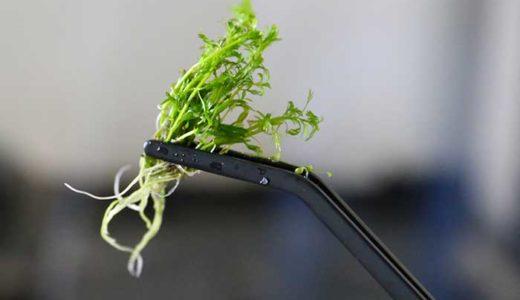 綺麗な水草のアクアリウムづくり!道具を集めて水槽の立ち上げ!