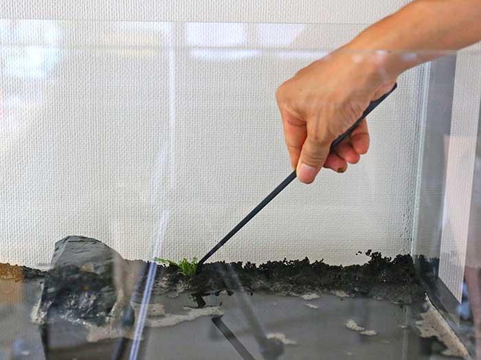 ソイルに水草を差し込む