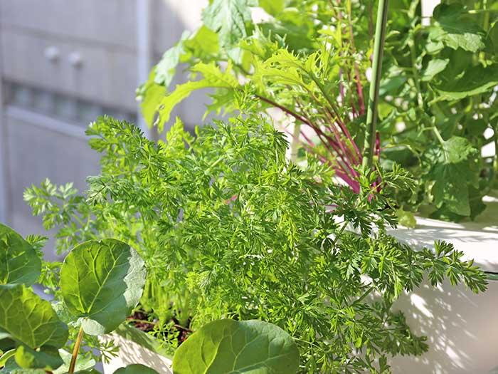 日差しで輝く秋野菜