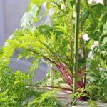 家庭菜園の初心者必見!秋に野菜を栽培するメリットと楽しく育てるコツ!