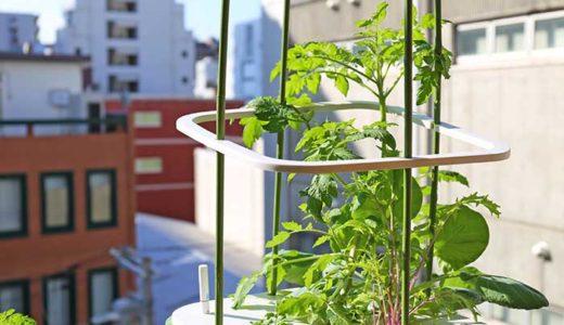 水耕栽培キットMASUCO(マスコ)で秋にトマトや水菜の種まき!冬でも育つかな?