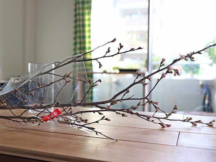 購入してきた桜