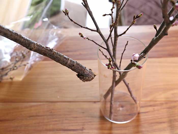 太い桜の枝も挿してみる