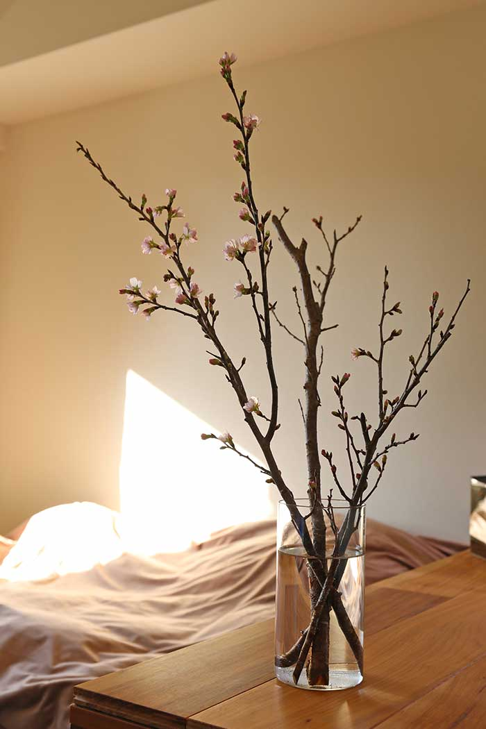 ガラス花器に生けた寒桜の枝