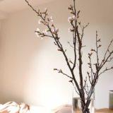 桜でハイセンスな和テイストの部屋が実現