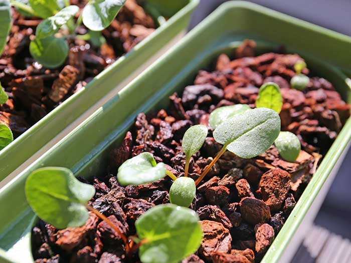 葉を広げて大きく成長