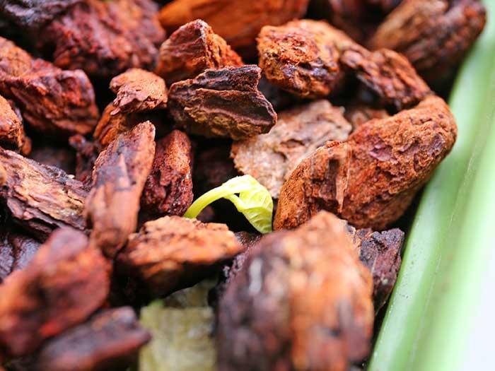 発芽した小豆の種