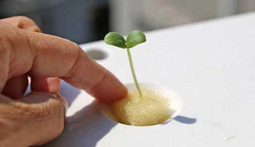 メロンの種を加温して発芽させる方法!結果はどうなった?