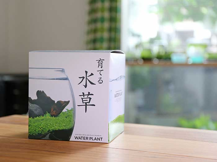 購入した「育てる水草」