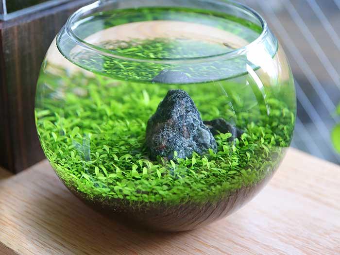 1カ月以上たったボトルアクアリウムの水草