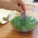 『育てる水草』でボトルアクアリウム!作り方が簡単で初心者におすすめ!