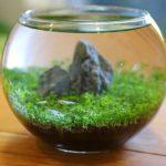育てる水草のボトルアクアリウムに綺麗な魚とエビを入れて魅力アップ!
