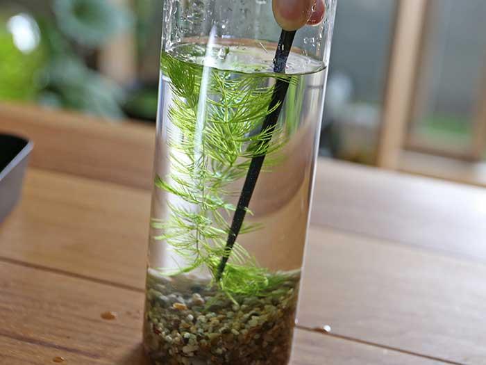 水草をボトルに入れる