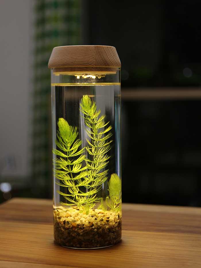 綺麗に照らされる水草