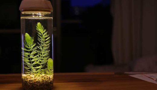 電池式のLED照明ボトルで超綺麗な水草のボトルアクアリウムづくり!