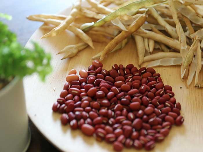 家庭菜園で収穫した小豆